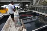 KKP Dukung Budidaya Lobster Keramba di Banda Aceh