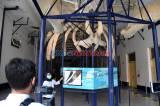 Serunya Wisata Virtual Study Tour di Kebun Raya Bogor