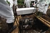 1 Tahun Covid-19 di Indonesia : 1.347.026 Kasus, 1.160.863 Sembuh dan 36.518 Meninggal