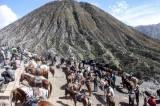 Jasa Penyewaan Kuda di Gunung Bromo