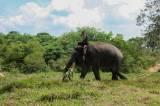 Berkunjung ke Pusat Konservasi Gajah di Taman Nasional Way Kambas