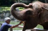 Kunjungan Wisatawan ke Bali Zoo Terus Meningkat