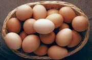 Telur, Sumber Protein Komplit Harian yang Mudah dan Ekonomis