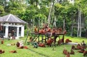 Tanjung Puting, Merasakan Eksotisnya Kawasan Taman Nasional