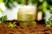 Mugwort, Next IT Ingredients Dunia Kecantikan