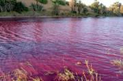 Heboh, Danau Dekat Laut Mati Berubah Jadi Merah Darah