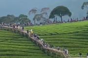 Viral Riung Gunung Pangalengan Dipadati Wisatawan hingga Mobil Tak Bisa Lewat