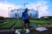 Melihat Aktivitas Petani Bertahan Hidup Manfaatkan Lahan Garapan di Sekitar JIS