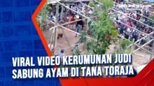 Viral Video Kerumunan Judi Sabung Ayam di Tana Toraja