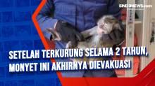 Setelah Terkurung Selama 2 Tahun, Monyet Ini Akhirnya DIevakuasi
