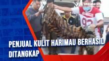 Penjual Kulit Harimau Berhasil Ditangkap