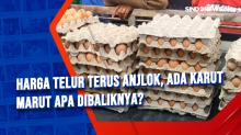 Harga Telur Terus Anjlok, Ada Karut Marut Apa Dibaliknya?
