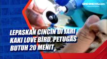 Lepaskan Cincin di Jari Kaki Love Bird, Petugas Butuh 20 Menit