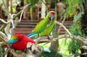 Kicau Burung Pengisi Waktu Selebritas