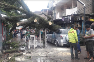 Cuaca Ekstrem Mengancam, Jakarta Utara Siagakan Puluhan Petugas Antisipasi Pohon Tumbang