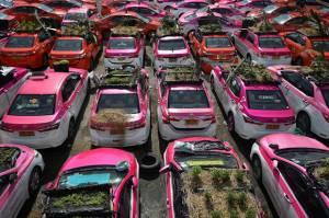 Kelamaan Nganggur, Toyota Camry di Thailand Diubah Jadi Kebun Sayur
