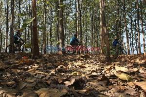 Ratusan Bikers Ramaikan MTB For Fun di Perbukitan Desa Sumur Kendal