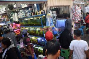Permintaan Ikan Hias di Semarang Meningkat Selama Pandemi Covid-19