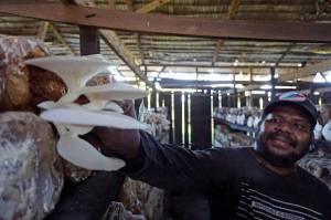 Beromzet Puluhan Juta, Petani Jamur Tiram di Sorong Tetap Bertahan di Tengah Pandemi