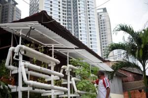 Kelurahan Sunter Agung Kembangkan Sistem Pertanian Perkotaan Rumah Kaca