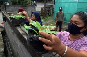 Warga Bambankerep Semarang Antusias Ikuti Pelatihan Urban Farming