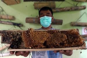 Mengintip Budidaya Madu Lebah Trigona Binaan Taman Nasional Gunung Gede Pangrango