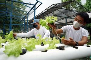 SMA Negeri 10 Makassar Latih Siswa Budidaya Tanaman Hias dan Sayuran Hidroponik