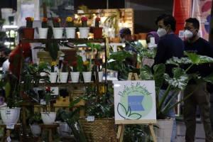 Berburu Tanaman Hias di Mal Bintaro Exchange