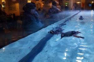 Jakarta Aquarium Safari Hadirkan Atraksi Pinguin di Resto Pingoo