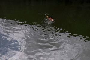 Mencari Ikan dan Berolahraga di Situ Gintung