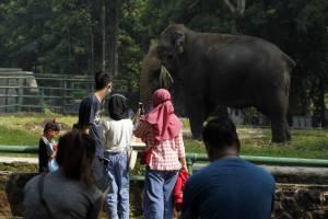 Hari Kedua Lebaran, Wisata Ragunan Untuk Warga Ber-KTP DKI Jakarta
