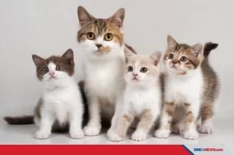 Ketemu Bayi Kucing tanpa Induk? Ini Tips Merawatnya