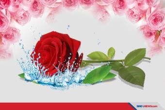 Selain buat Kecantikan Kulit, Air Mawar Bermanfaat untuk Rambut
