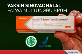 Vaksin Sinovac Suci dan Halal, Fatwa MUI Tunggu BPOM