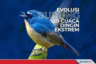Evolusi Burung Dataran Tinggi Pada Cuaca Dingin Ekstrem