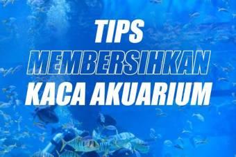 Tips Membersihkan Kaca Akuarium agar Tak Berkerak dan Kotor