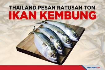 Thailand Pesan Ikan Kembung Ratusan Ton ke Indonesia