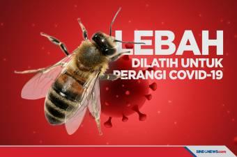 Lebah Berhasil Dilatih untuk Mendeteksi Virus Covid-19