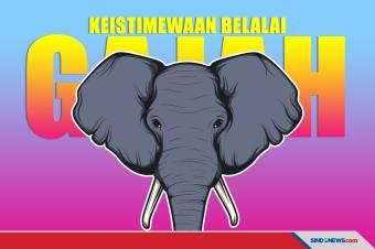Ilmuwan Mengungkap Keistimewaan Gajah Ternyata Ada di Belalainya