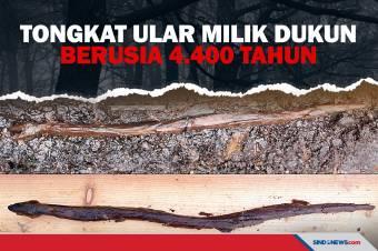 Tongkat Berbentuk Ular Milik Dukun Berusia 4.400 Tahun Ditemukan