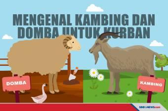 Mengenal Perbedaan Kambing dan Domba untuk Hewan Kurban