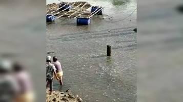 Warga Dikejutkan Ribuan Ikan Muncul di Muara Kali Baubau