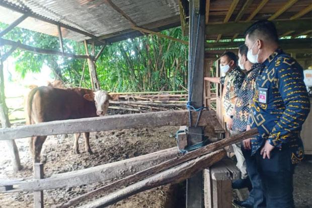 Kecamatan Polut Akan Jadi Pusat Pengembangbiakan Sapi di Takalar