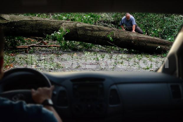 Hujan Disertai Angin, Sejumlah Pohon Bertumbangan di Jakarta dan Bekasi