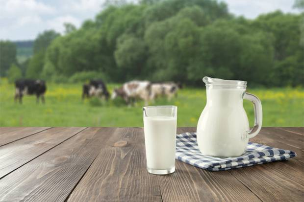 Susu Sapi A2 Baik untuk Saluran Cerna, Dukung Imunitas hingga Kurangi Risiko Penyakit Serius