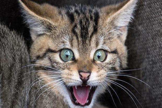 'Bajak' Pesawat, Kucing Ini Serang Pilot di Kokpit saat Mengudara