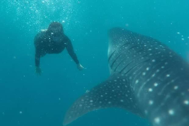 Seru! Berenang Bersama The Gentle Giant di Botubarani