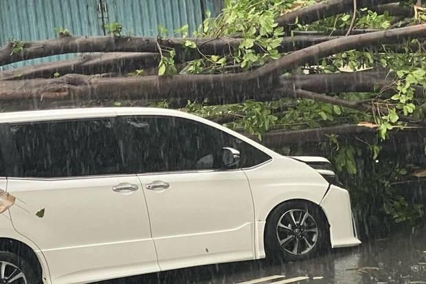 Ditimpa Pohon Tumbang, Mobil Minibus Ringsek di Dekat Kantor BPN Jakbar