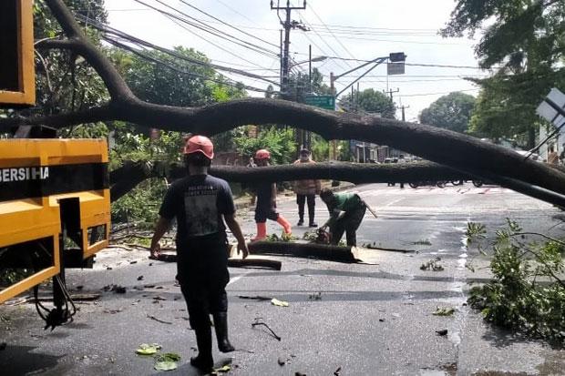 24 Pohon di Jakarta Barat Tumbang, Damkar DKI: Itu Laporan yang Masuk