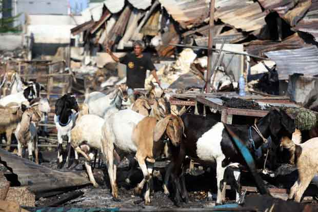Pedagang Pasar Kambing Tanah Abang Sudah Jalankan Aktivitas Jual Beli